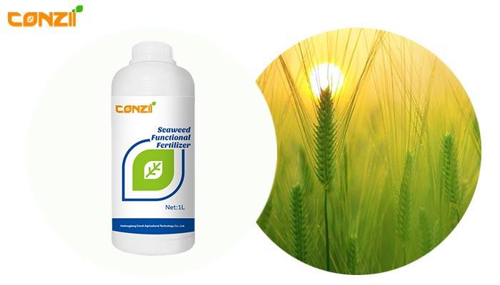 Seaweed-Functional-Fertilizer